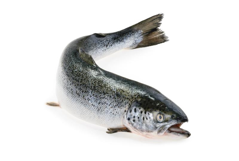 salmão fresco inteiro
