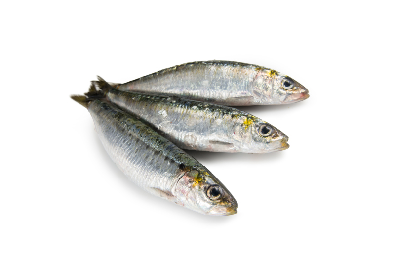 sardinha fresca inteira