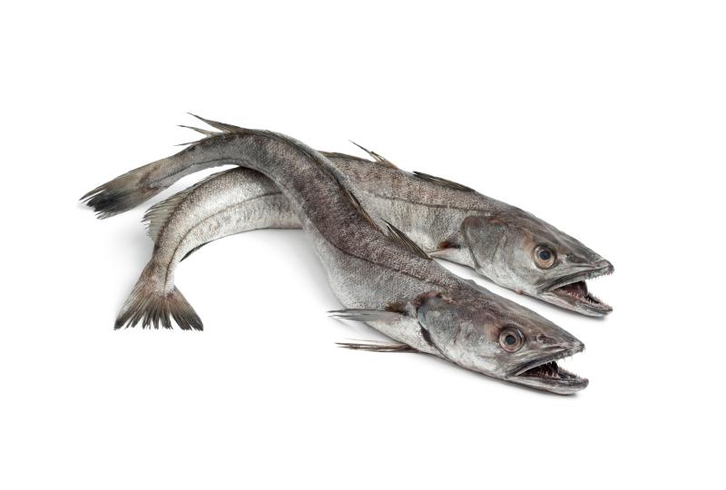 pescaad